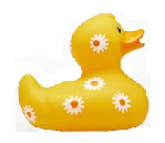 Daisy Mini Duck (Min Order Qty - 12)
