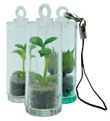 Baby Pet Plants - Includes 1 Colour Print on capsule & 1 Side (F