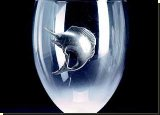 Sailfish Red Wine Glass - 24.5CL - African Theme