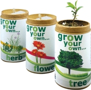 Grow your own flower-indigenous flower seeds in recycled contain